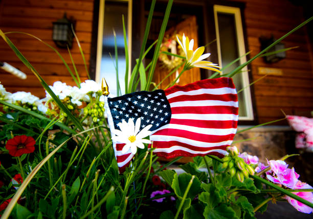 American flag with white flower stock photo