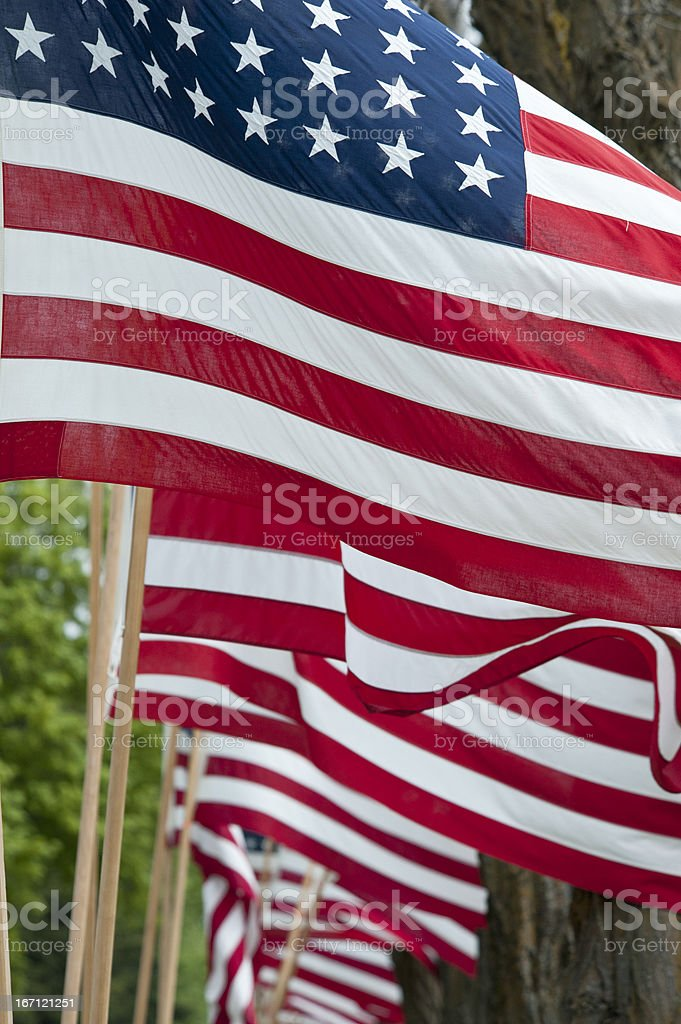 American Flags Lined Up in a Row royalty-free stock photo