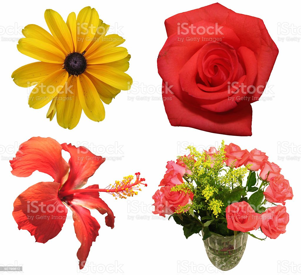 American Flowers (Isolated) royalty-free stock photo