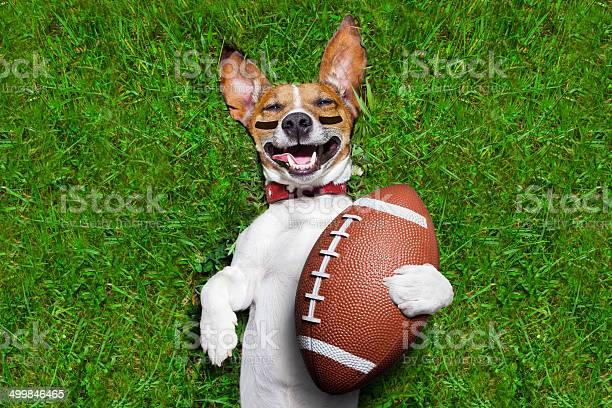 American football dog picture id499846465?b=1&k=6&m=499846465&s=612x612&h=elrmnsagm83jideabcsrhn18buqqzpcan4q zvpe wg=