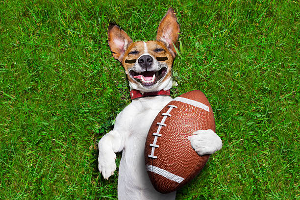 american football-hund - amerikanischer football stock-fotos und bilder