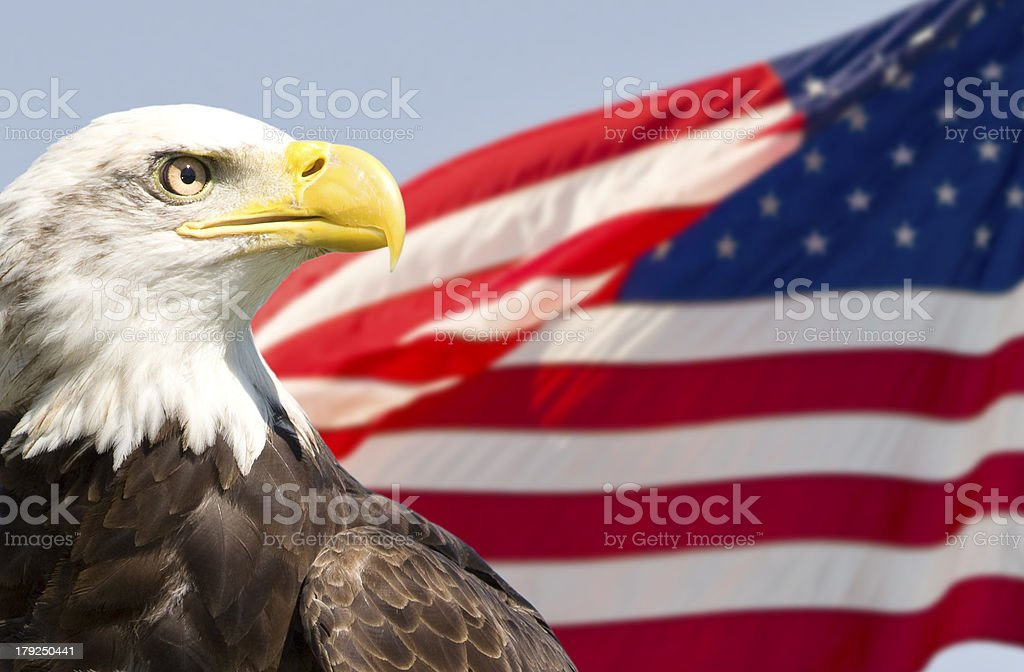 American imagery, bald eagle with stars & stripes flag stock photo