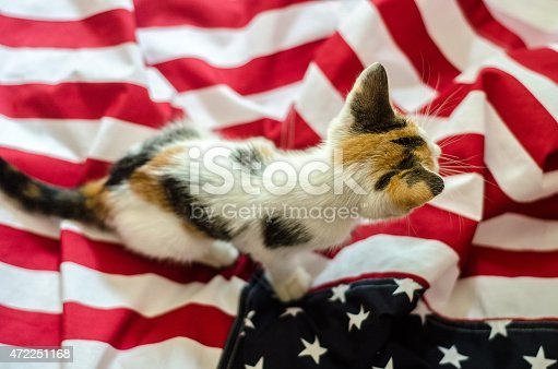 490776989 istock photo american kitty cat 472251168
