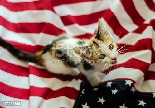 490776989 istock photo american kitty 472251166