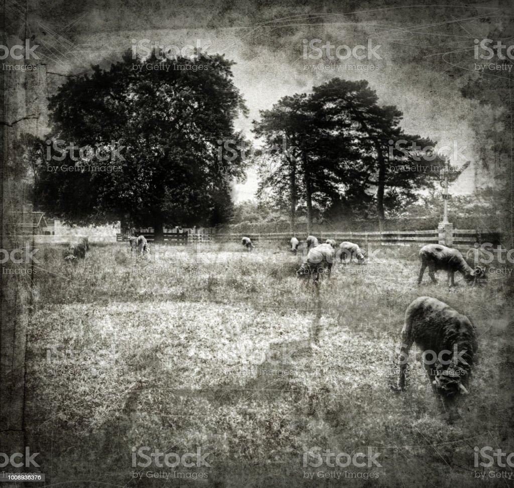 American Pastoral Farm stock photo