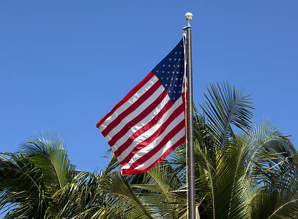 American Stars & Stripes Flag on Palm Background stock photo