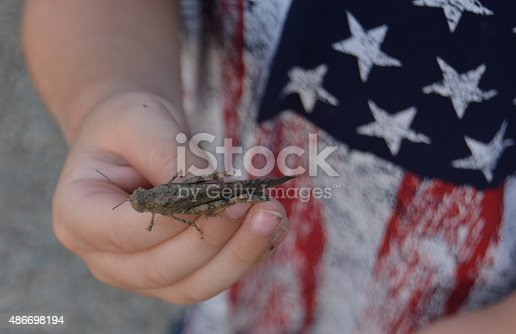 child holding a grass hopper in an American flag tshirt