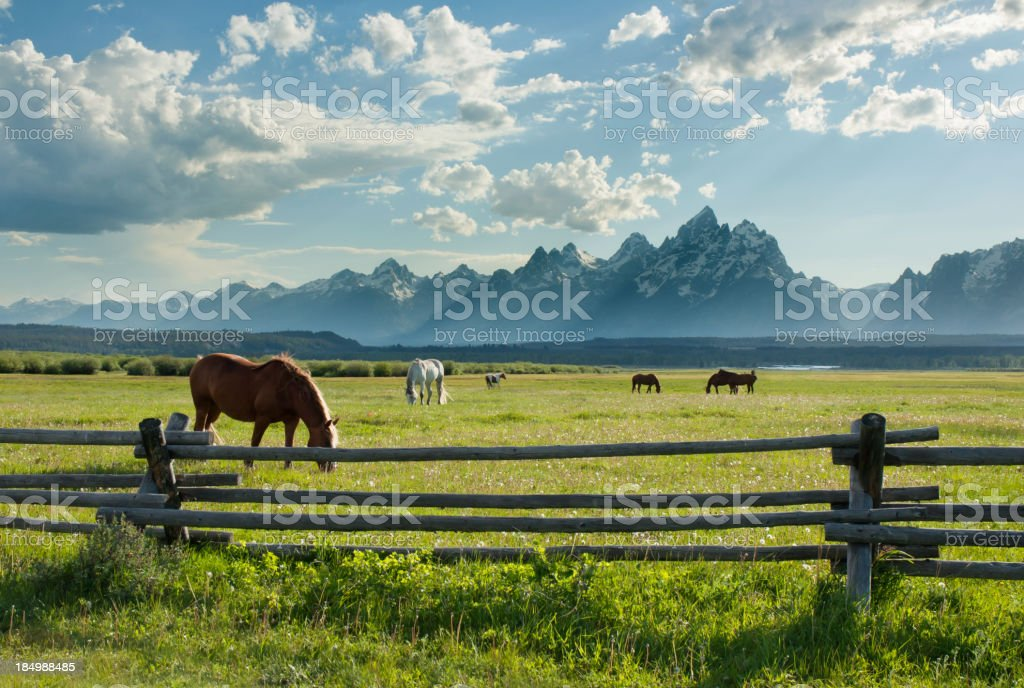 American West Horses and Grand Teton Rocky Mountains stock photo