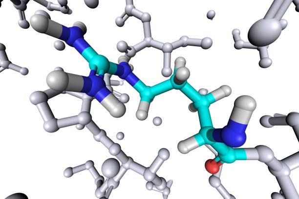 """Amino Acid Arginine """"Molecular model of Arginine, one of 20 required amino acid to form proteins."""" peptide stock pictures, royalty-free photos & images"""