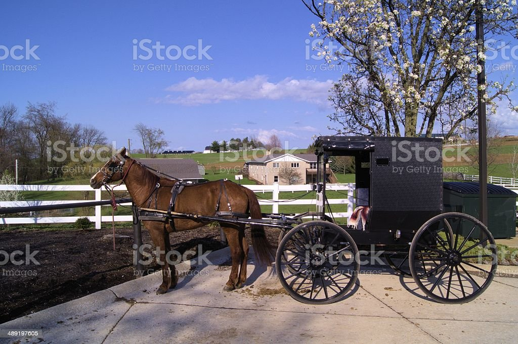 Amish buggy and brown horse stock photo