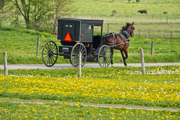 阿米什越野車和蒲公英場 - 載客馬車 個照片及圖片檔