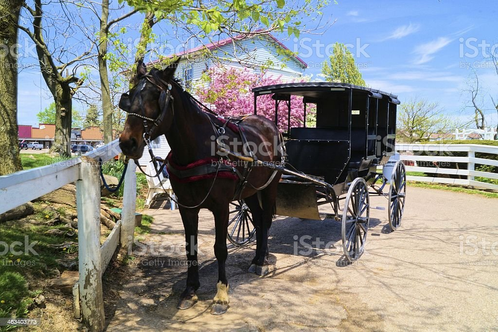 Amish buggy in the springtime stock photo