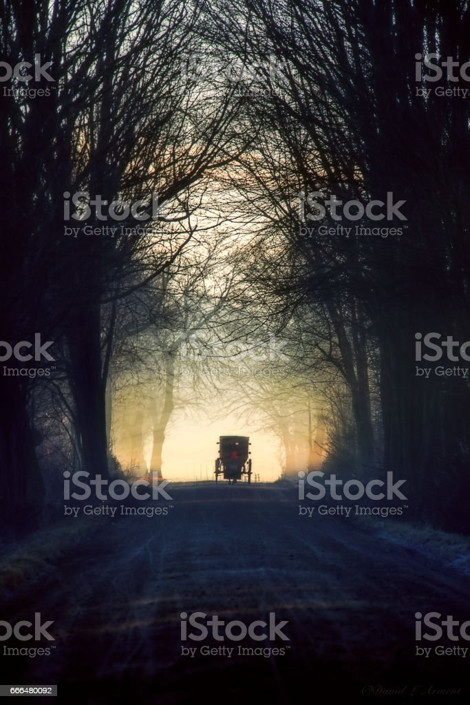 Amish Buggy on Tree Lined Road, Vertical stock photo
