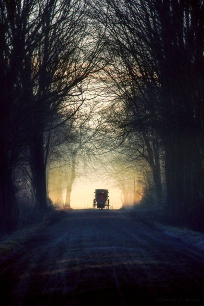 amish buggy on tree lined road, vertical - cocchio foto e immagini stock