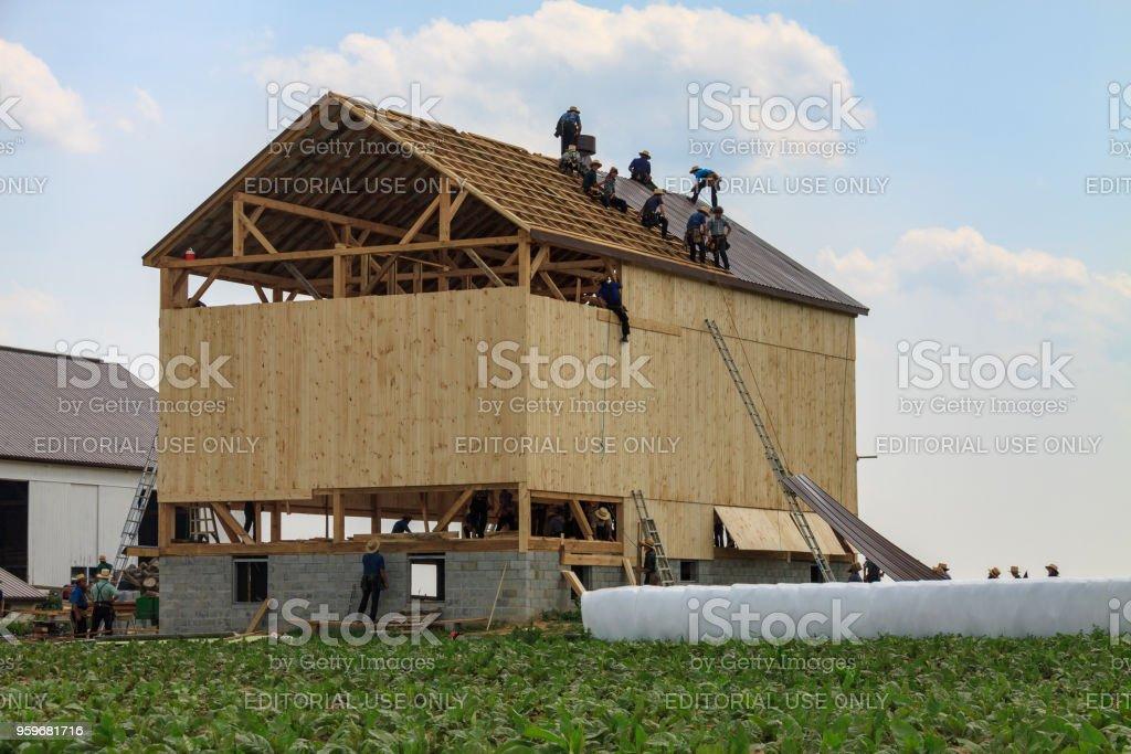 Amish Build Barn stock photo