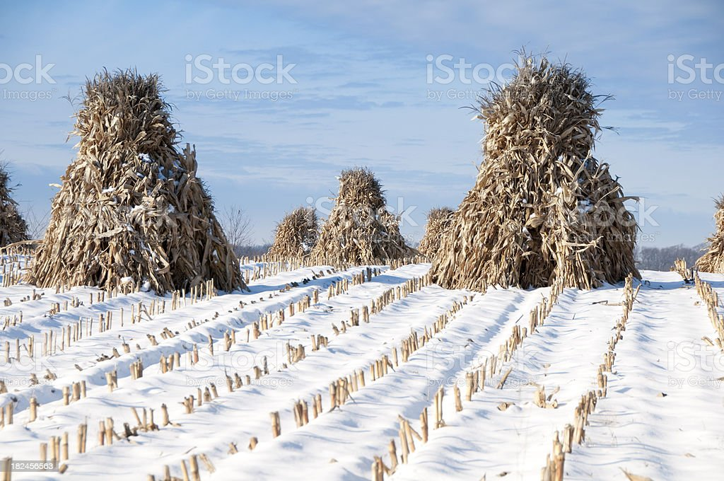 Amish Corn Stacks Blue Sky and Snow royalty-free stock photo