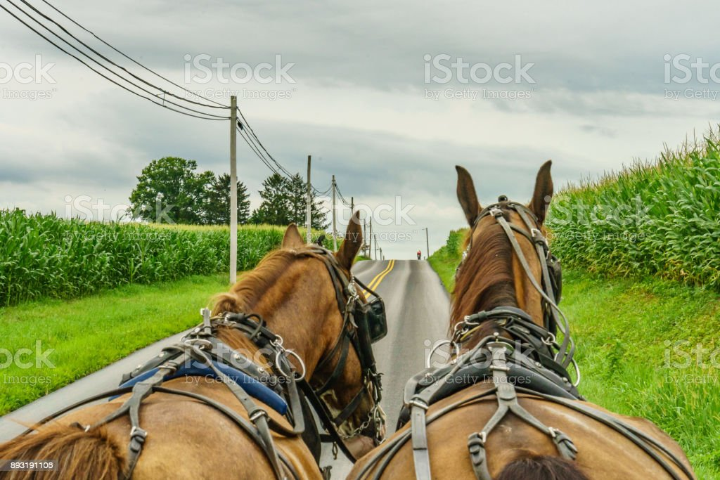 Amish country farm field agriculture and hoses in Lancaster, PA stock photo