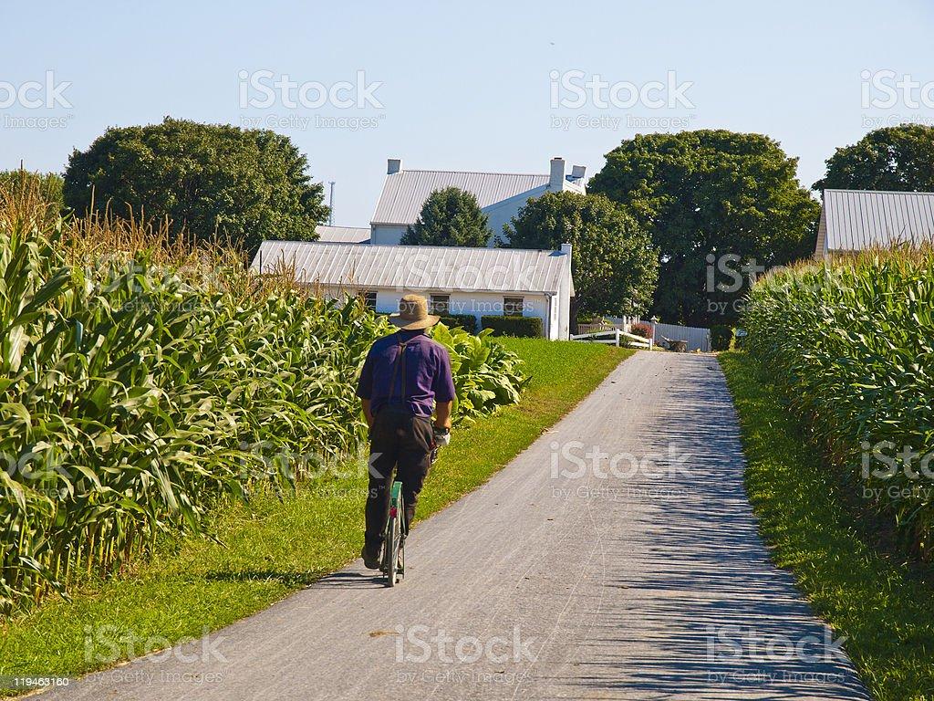 Amish Farmer stock photo