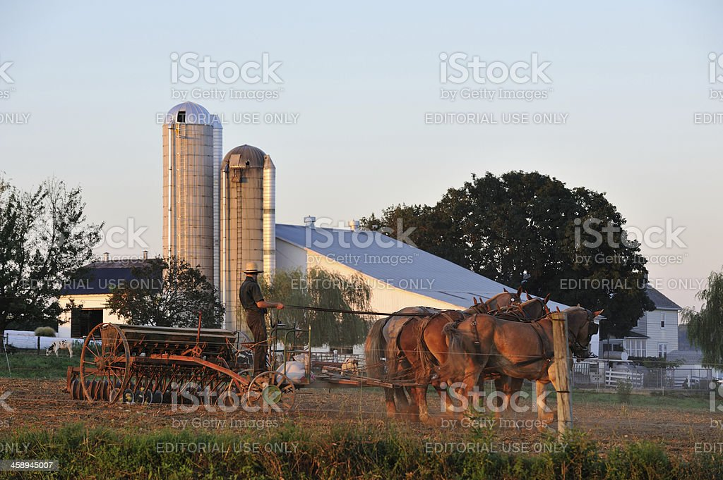 Amish Farmer stock photo