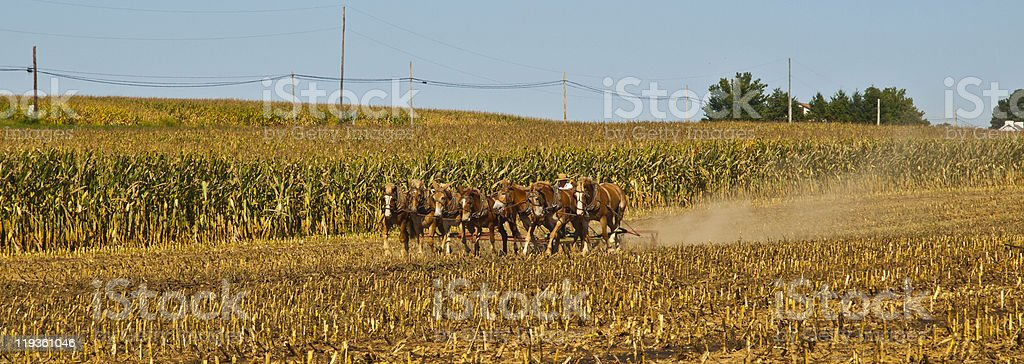 Amish Farmer plowing the field with 7 horses stock photo