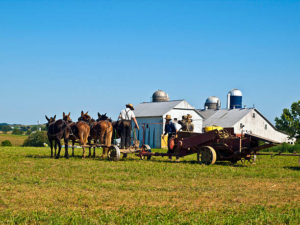 Amish Farmers, Lancaster USA stock photo