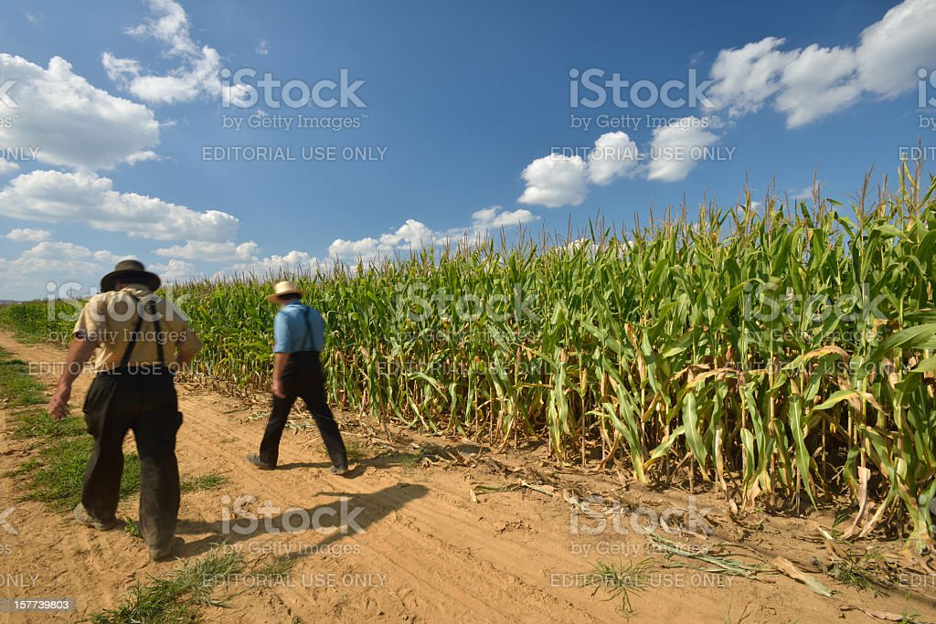 Amish Farmers stock photo