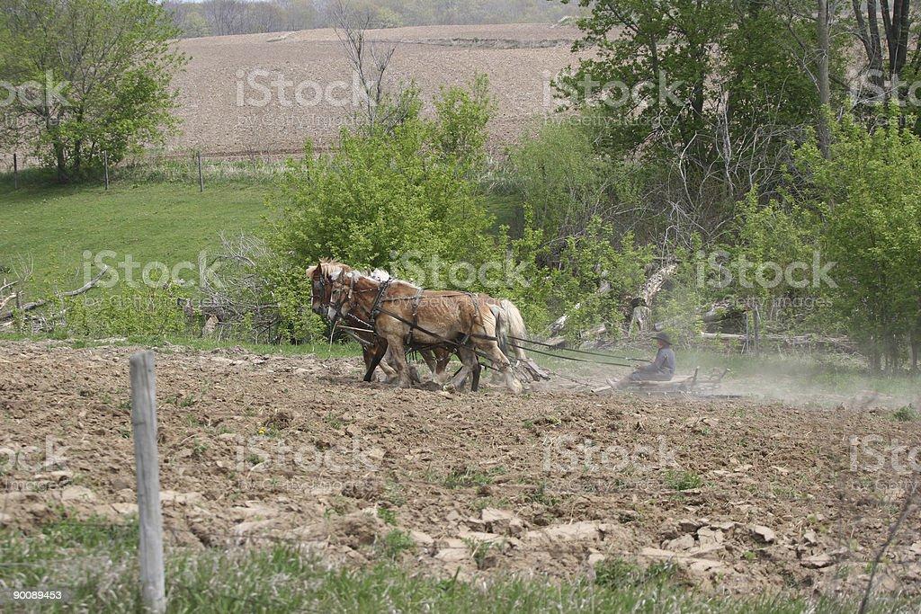 Amish Farming royalty-free stock photo