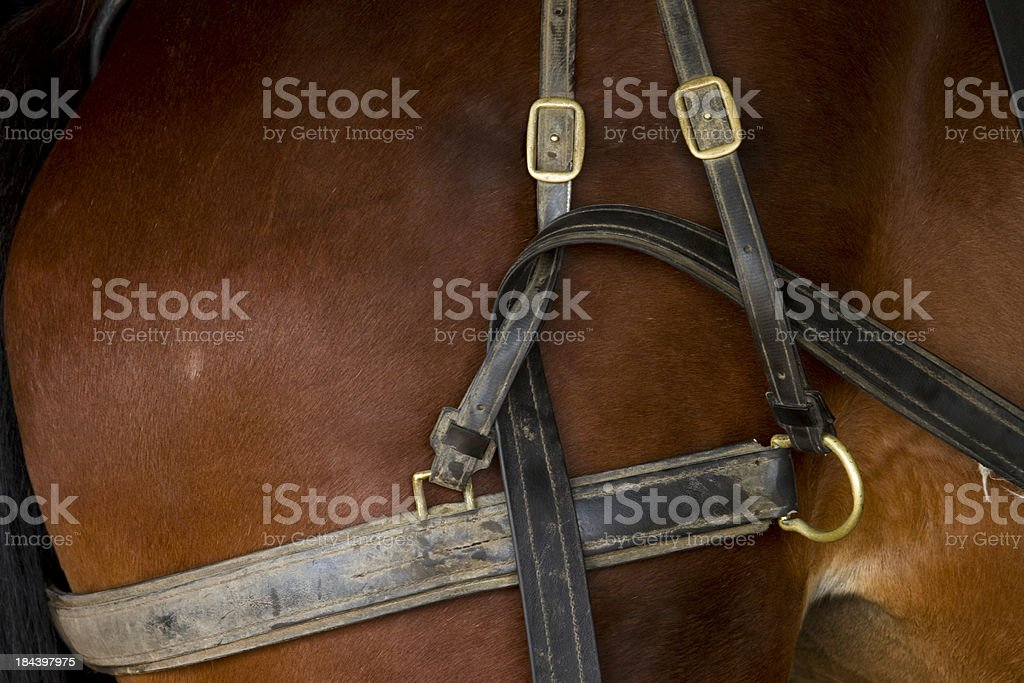 Amish Horse American Standard Bread With Leather Harness stock photo