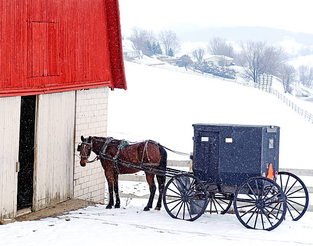 Amish Horse and Buggy in Snow stock photo