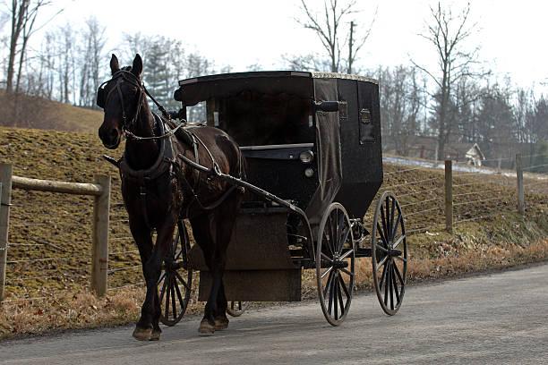 amish pferd mit buggy - pferdekutsche stock-fotos und bilder