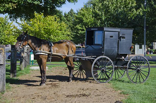 Cheval et calèche Amish - Photo