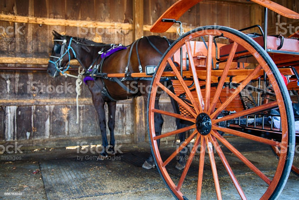 Amish Horse and Buggy foto stock royalty-free