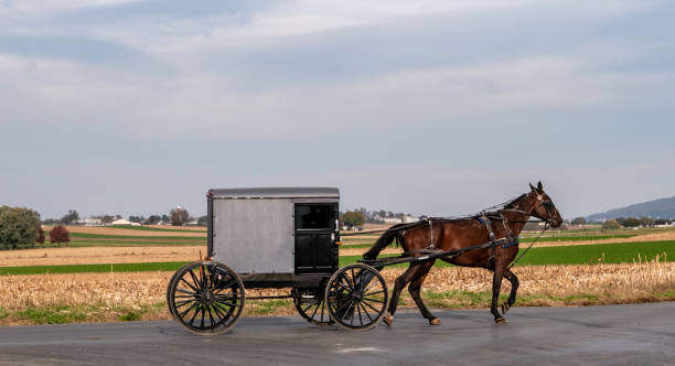 amish horse and buggy traveling on a residential road - cocchio foto e immagini stock