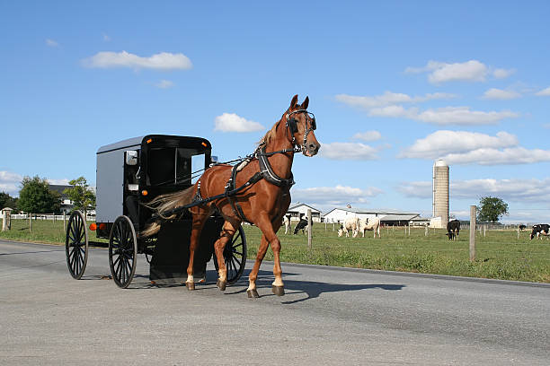 amish pferd und kutsche - pferdekutsche stock-fotos und bilder