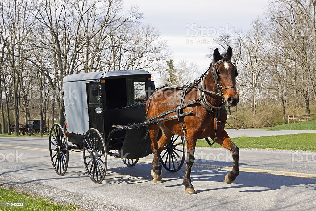 Amish Horse and Carriage stock photo