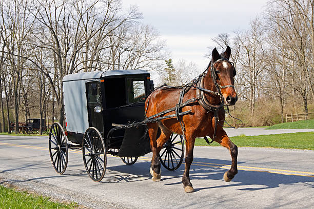 amish horse and carriage - 載客馬車 個照片及圖片檔