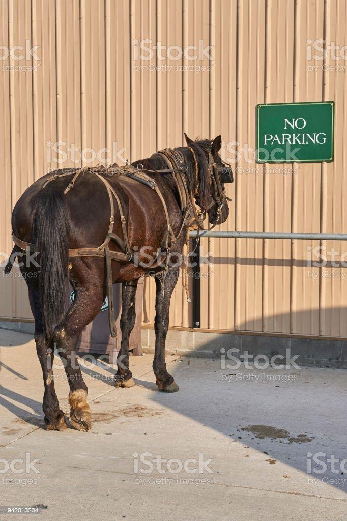 Amish Horse At Hitching Post Stock Photo - Download Image