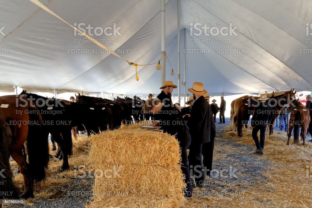 Amish Volunteers Check Papers on Horses for Sale at the Annual Spring Sale stock photo