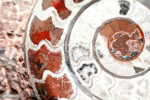 istock Ammmonite Nautilus 489975433