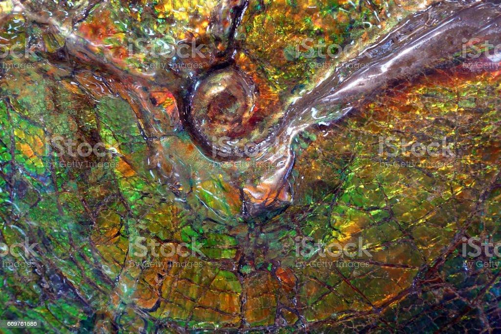 Ammolit Fossil auf Stein Hintergrund – Foto