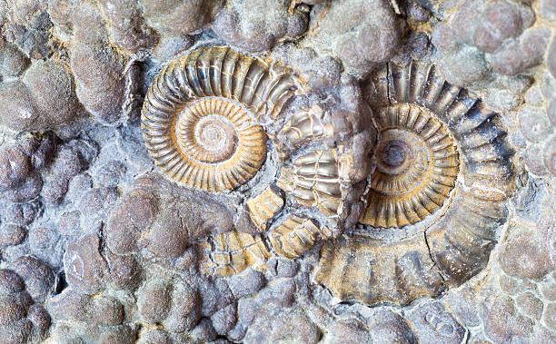 Ammonit 2 – Foto