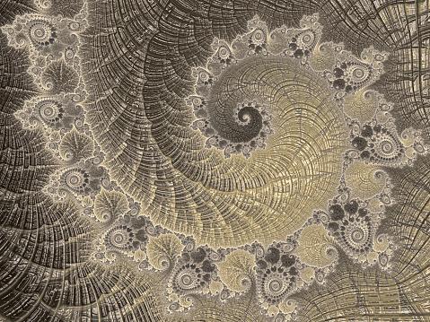 菊石抽象黃金螺旋復古鸚鵡螺海貝殼分形藝術豪華斐波那契模式 照片檔及更多 不規則碎片形 照片