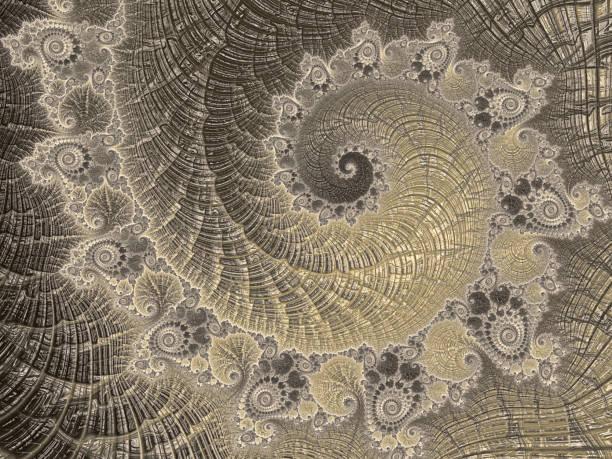 菊石抽象黃金螺旋復古鸚鵡螺海貝殼分形藝術豪華斐波那契模式 - 黃金比例 個照片及圖片檔