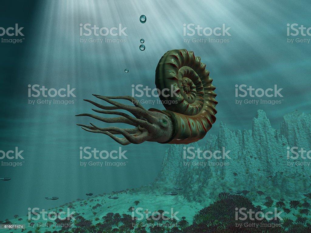 Ammonite at sea – Foto