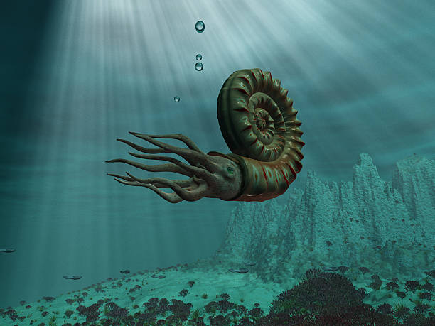 Ammonite at sea – Foto