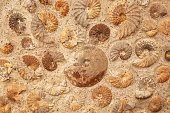A background texture of ammonite fossils embedded in rock.