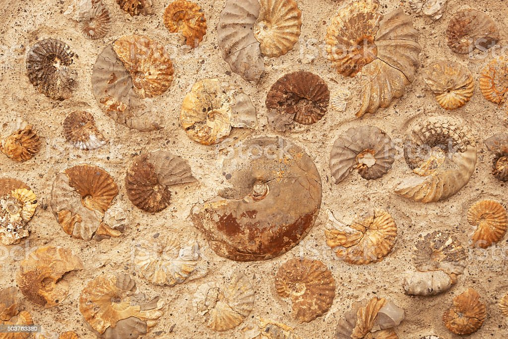 Ammonite background stock photo