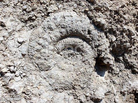 istock Ammonite close-up 1174193937