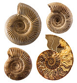 Ammonite fossil collection isolated on white.