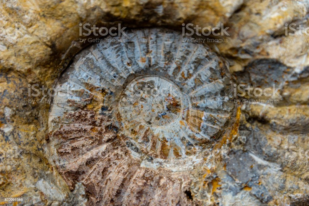 ammonite fossil, morocco stock photo